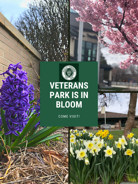 Veterans Park Is In bloom