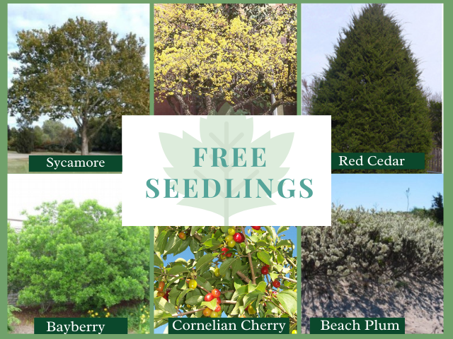 Free Seedlings-640